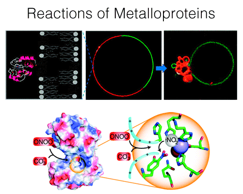 reactions-of-metalloproteins-501x400