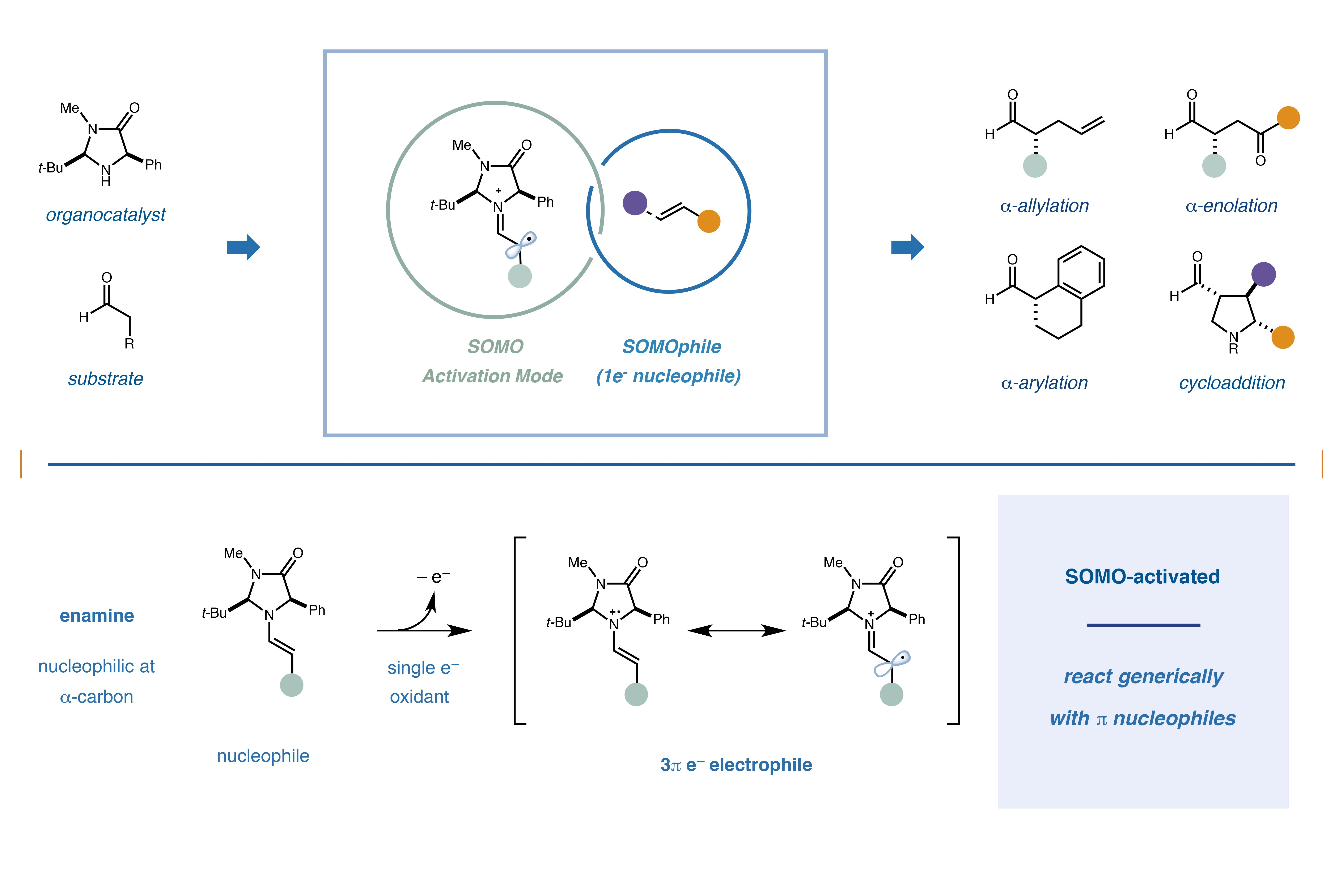 organocatalysis thesis Their application in asymmetric organocatalysis marcus€frings, isabelle€thomé and€carsten€bolm thesis of the sulfoximine-based thiourea (r).